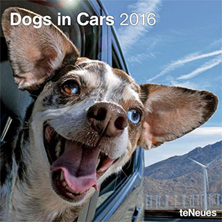 2016 Calendar of Dogs in Cars