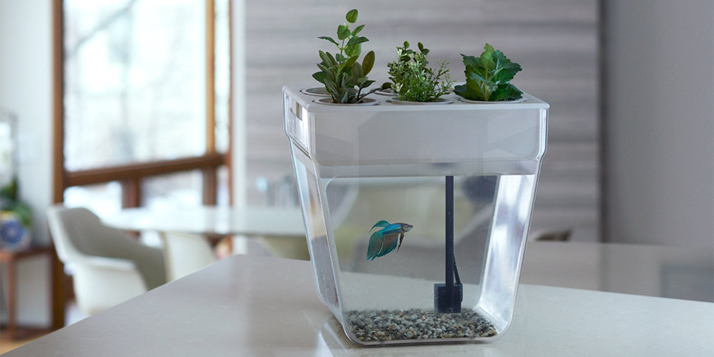 Fish tank herb garden drunkmall for Fish tank herb garden
