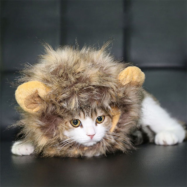 The Cutest Little Lion Mane for Cats and Small Dogs