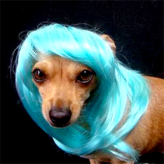 Fabulous Puppy Wig