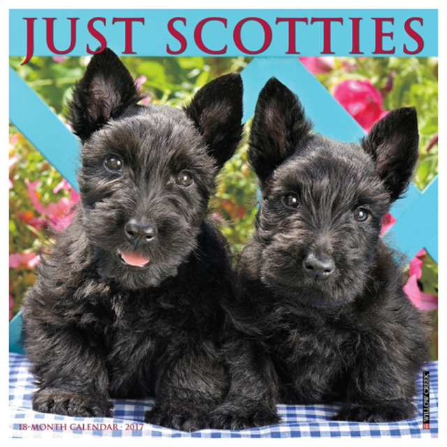 Scottish Terriers Calendar