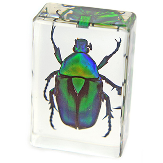Giant Beetle Paperweight