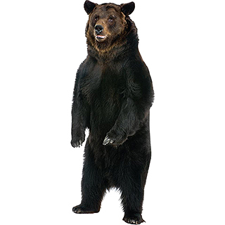 Life Size Bear Cutout
