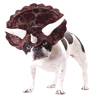 Triceratops Dog Hat