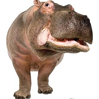 Life Size Cardboard Hippo