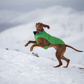 FitBark Wearable for Dogs