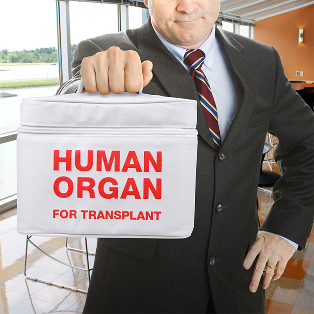 Human Organ Lunch Cooler